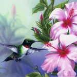 Ruby-Throated Hummingbird with Pink Hibiscus 3