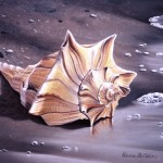 Seashell         Genesis on Panel